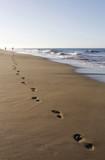 Fototapety Die Spur am Strand