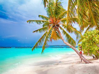 Coconut palm tropical beach with white sand