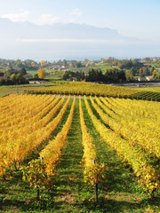 Vinyards in Montreux against Geneva lake, Switzerland