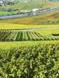 Vineyards in Montreux, Switzerland