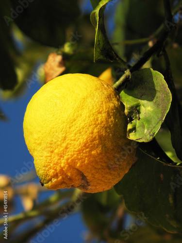 Lemon against blue Italian sky