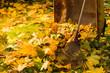 Leaf pile and rake