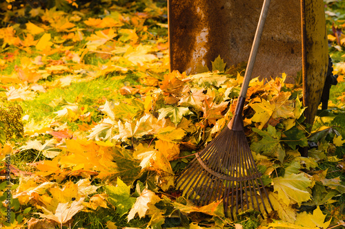 Leaf pile and rake