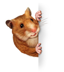 Hamster Holding A Blank Card