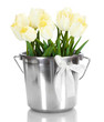 beautiful tulips in bucket isolated on white.