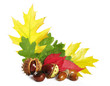 autumn leaves with acorns and chestnuts