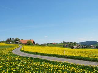 Scenic meadow in Emmental region, Switzerland