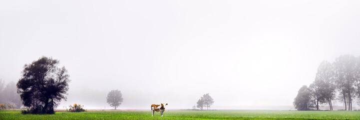 bovino al pascolo