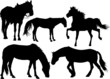 Set of silhouettes of a horse