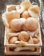 Champignons und Austernpilze in Holzkiste