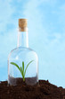 small plant in soil inside glass bottle isolated on  blue