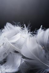 黒背景に複数の羽根