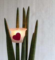 bougie éclairée d'un coeur rouge sur plante verte