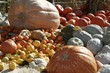 Large Variety of Pumpkins from Huge Ones to Tiny Ones