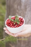 A hand holding a bowl of lingonberries