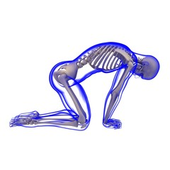 Transparenter Körper, Skelett, posierend