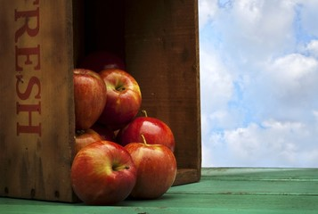 Farm Fresh Apples Spilling from a Crate