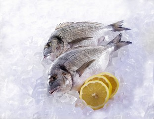 Two Dorades on ice with lemon slices