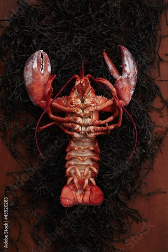 The Underside of a Whole Steamed Lobster on Seaweed
