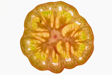 Slice of tomato (cross-section), backlit