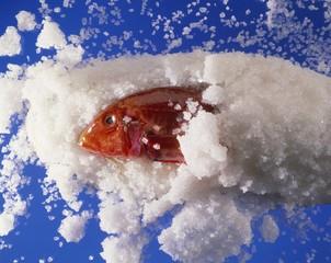 Red mullet in a salt crust