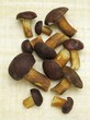 Bay bolete mushrooms