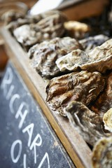 Fresh oysters at a market