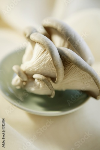 Fresh Oyster Mushrooms in a Small Dish