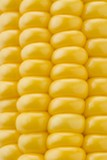 Corn on the cob (detail)