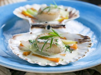 Scallops in tarragon sauce