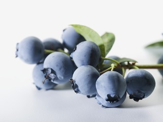 Bunch of Blueberries with Branch