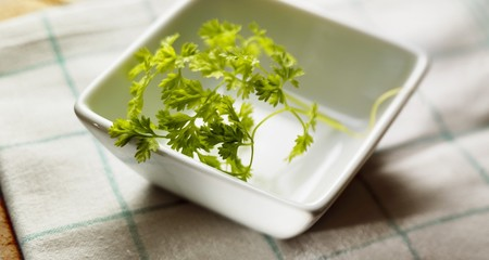 Chervil in white dish