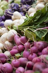 Radishes and Salad Turnips at the Portland Farmers Market in Monument Square in Portland, Maine