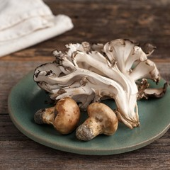Wild Matsutake and Maitake Mushrooms Harvested in Maine