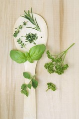 Rosemary, thyme, basil, oregano and parsley on a spoon