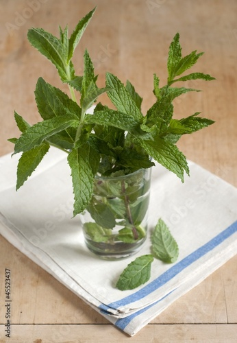 Fresh Mint from a Maine Garden in a Glass of Water