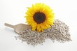 Sunflower seeds, wooden scoop and sunflower