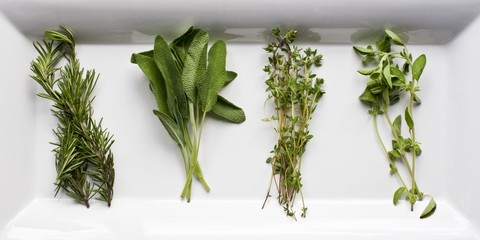 Four Fresh Herbs; Rosemary, Sage, Thyme and Oregano
