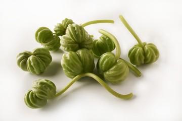 Nasturtium seed pods