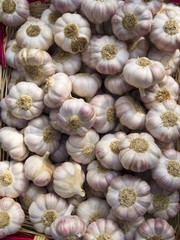 Garlic Bulbs at The Carouge Market is in Geneva Switzerland