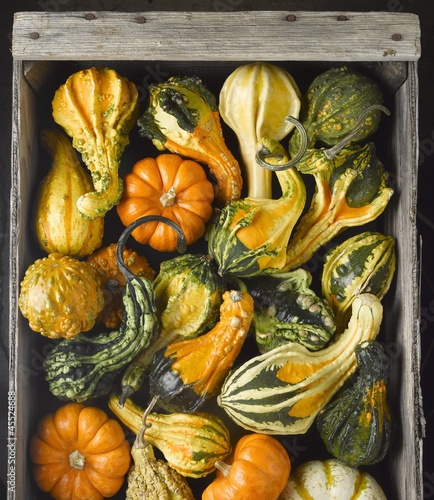 Assorted Gourds in a Crate; From Above