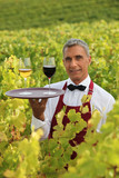 Sommelier in a vineyard
