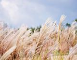 Fototapety reeds