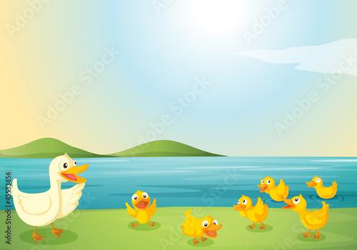 Papiers peints Riviere, lac ducks