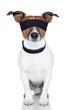 blindfold dog cover eyes