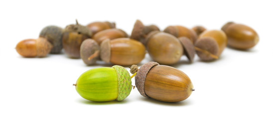 acorns of different colors on a white background