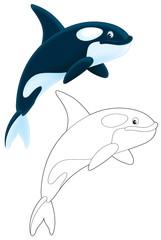 Orca diving