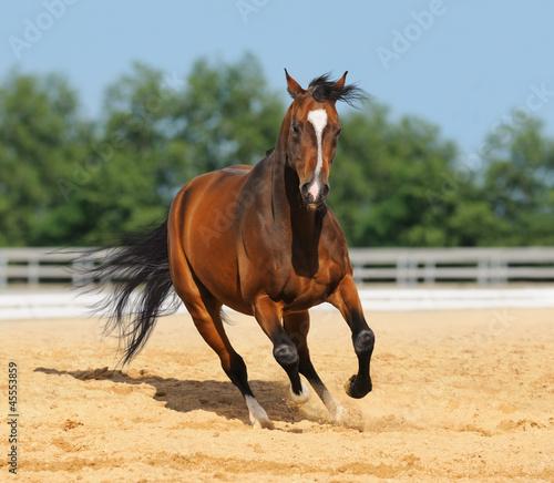 Fototapeten,pferd,reiten,galopp,hengst