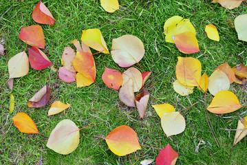 autumn yellow foliage on herb
