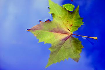 autumn sheet in water